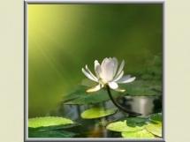 ogrzewanie_kwiaty